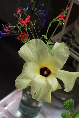 お庭で咲いていたオクラの花