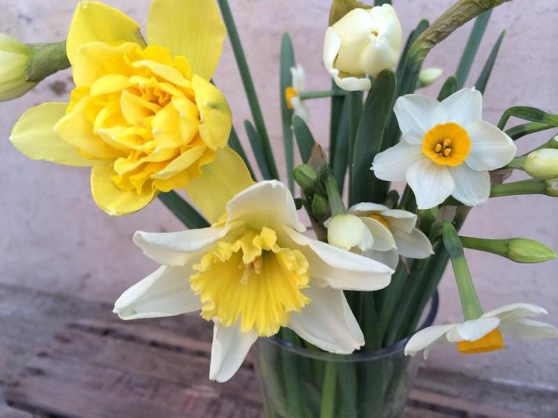 2月の花 水仙
