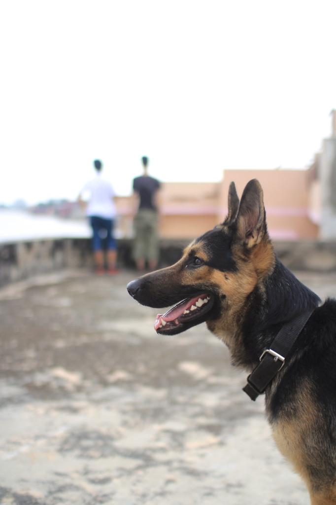 宿の番犬、カルー。野犬と比べて毛並みがきれい。後ろの2人はガンジス川をみつめる河西と村上