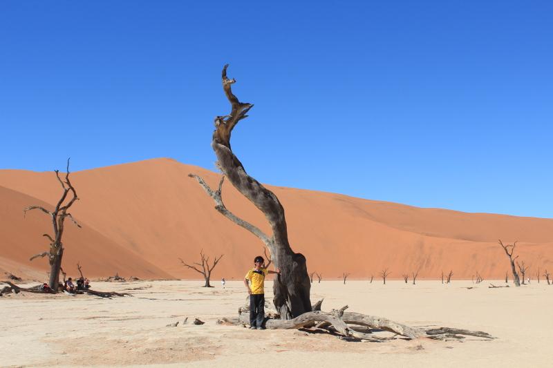 砂漠に佇む枯れ木と