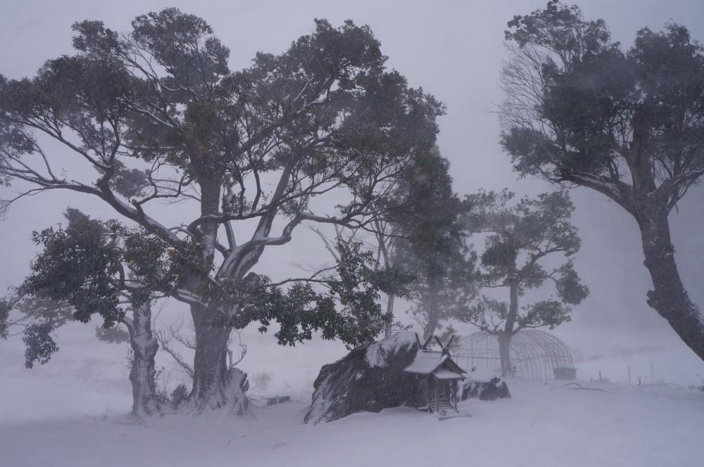 元旦の朝は猛吹雪