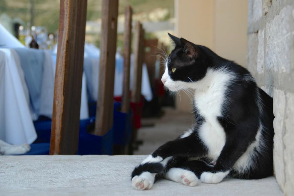 ドゥブロヴニクにはいたるところにネコがいました