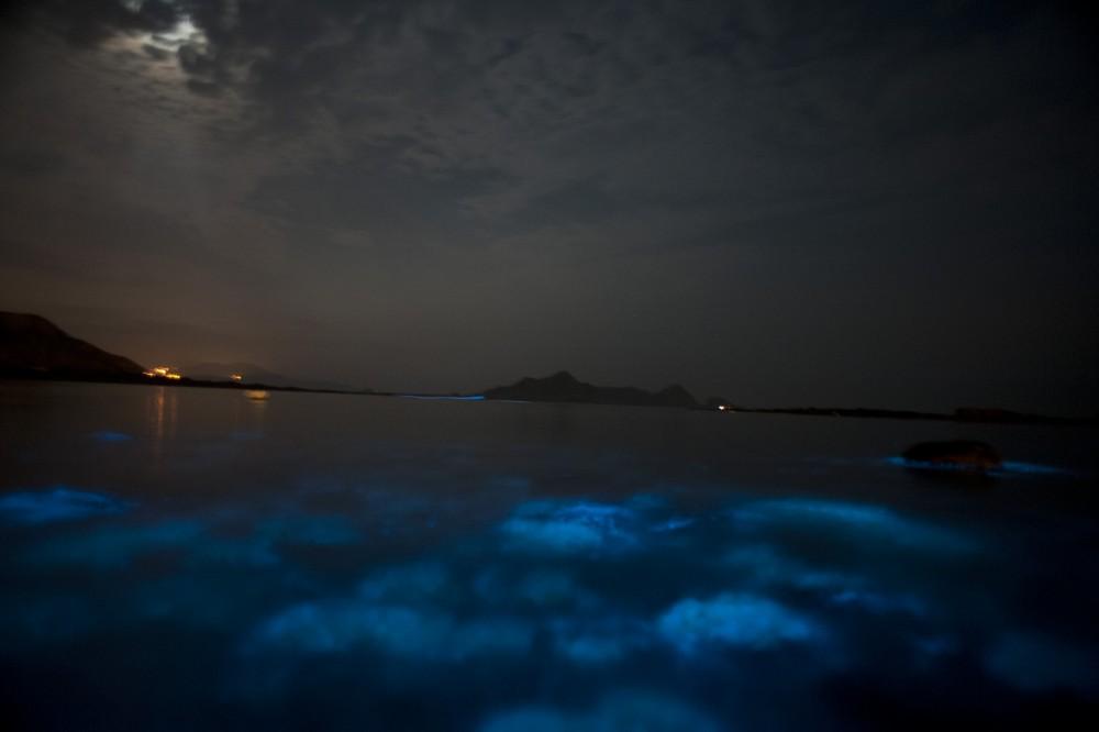 青緑にひかる夜光虫(参考資料)