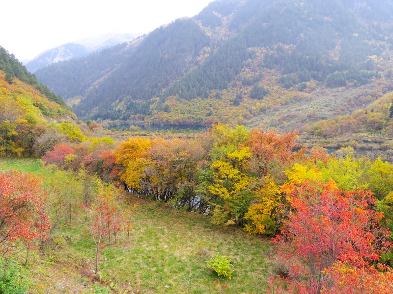 紅葉。九寨溝は秋が一番人気のシーズン。というのも美しい蒼の湖だけでなく、色鮮やかな紅葉も一緒に楽しめるから