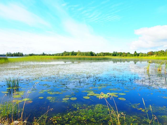 フィンランドの湖。ナシエさん撮影
