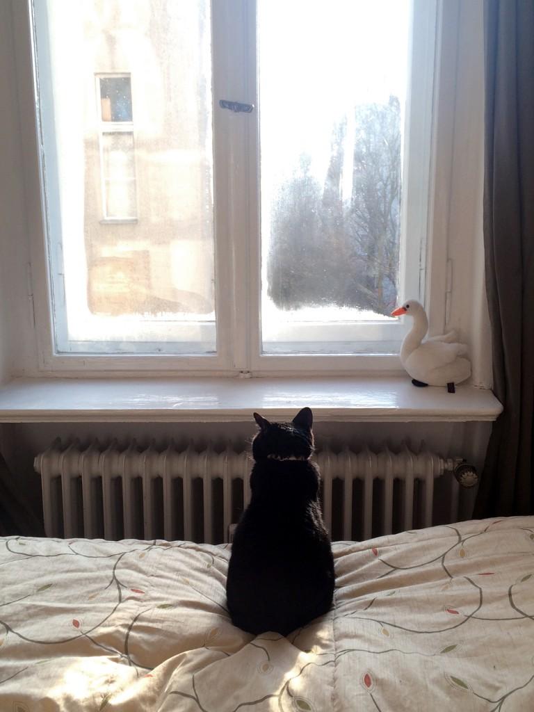 真冬の窓を眺めるうちの猫。ベルリンの家をとても気に入っているのが伝わってきます