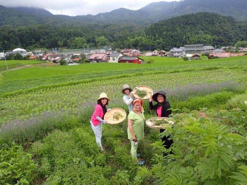 広島県の里山でハーブを育てている「地球のお庭」。ハーブ自身が持つ環境を生き抜く力を大切にしています。