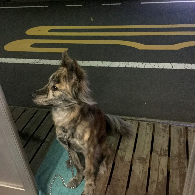 巡回中のお巡りさんに「犬がいると一定の防犯効果があるんですよ」と教えていただきました。看板犬レラも安全にひと役かってくれているのでしょうか。
