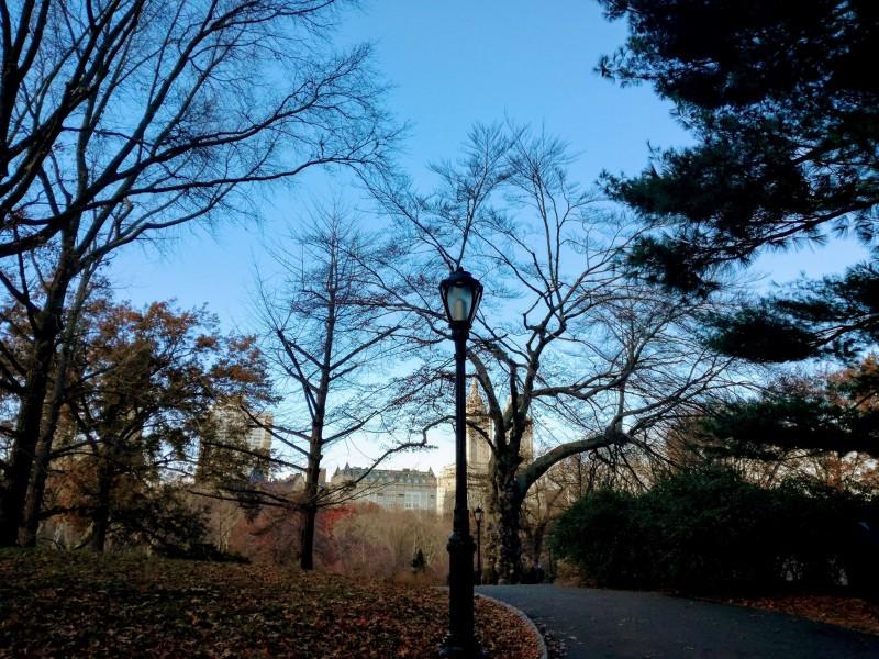 初冬のセントラル・パーク。キリッとした空気の中、歩く。
