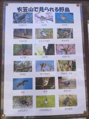 歩いて行けるところにある『衣笠山公園』を散策。周辺には野鳥もたくさんおり、わが家の庭にヒヨドリやメジロが遊びに来ることも。